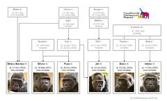 Gorilla Family - Rhenen