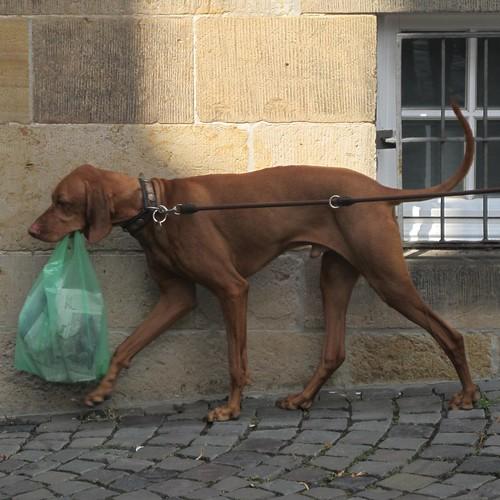 brave dog - EXPLORE