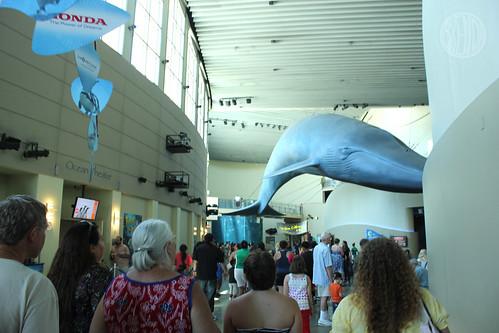 giant blue whale
