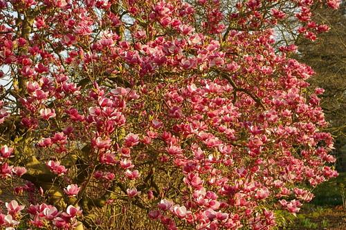 Kew_Gardens-022
