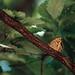 木陰の蝶々