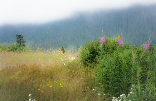 Meadow at Snoqualmie Pass