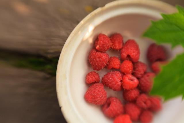 HD обои, дача, фотографии природы, ягода