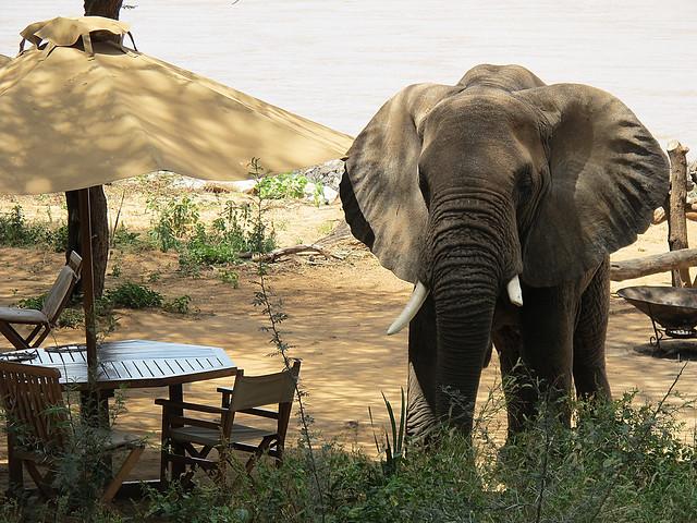 samburu elephant bedroom camp flickr photo sharing