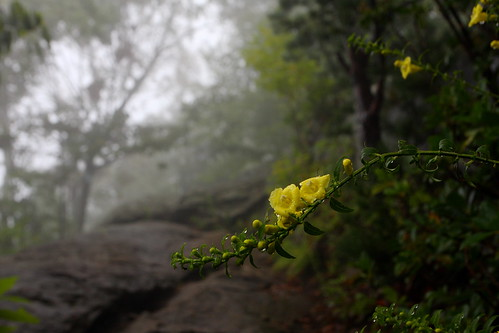 Old Rag Mountain: Lush flowers
