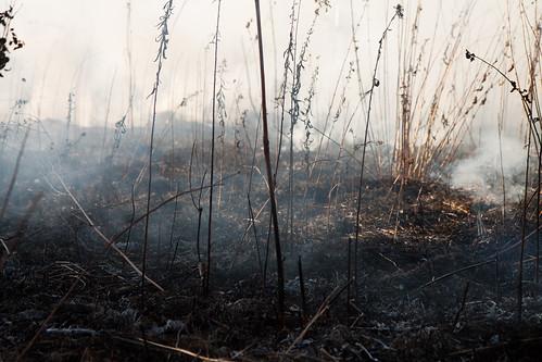 Burning biocore prairie - 20121108 - 37