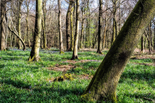 Surrey woodland, Orton effect