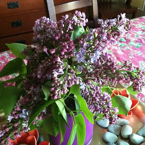 I love the smell of lilacs in the #spring