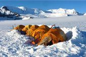 Patagonien. Mitten auf dem Inlandeis, Lager am Cerro Mariano Moreno. Foto: Günther Härter.