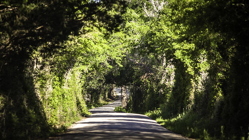 texas texashillcountry washingtoncounty chappellhill color colorimage country countryside curve curving fineartphotography flowers green hillcountry image intimatelandscape nature nopeople photo photograph photography roadscape roses spring trees wildflowers f28 mabrycampbell march 2012 march242012 201203246373 200mm ¹⁄₁₀₀₀sec 100 ef200mmf28liiusm