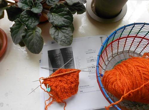 wrong sock with purple saintpaulia