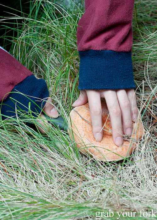 cutting a pine mushroom in the forest