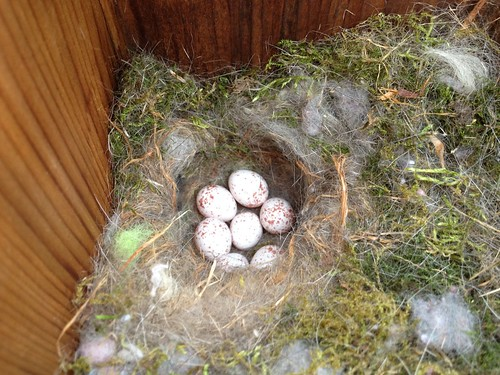 birds backyard nest nj carolinachickadee songbird iphone poecilecarolinensis paridae