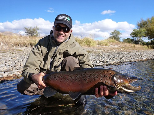 Limay Brown 1