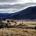 Australian Countryside by ` Toshio '