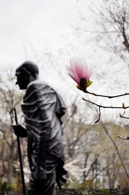Blossom & Gandhi