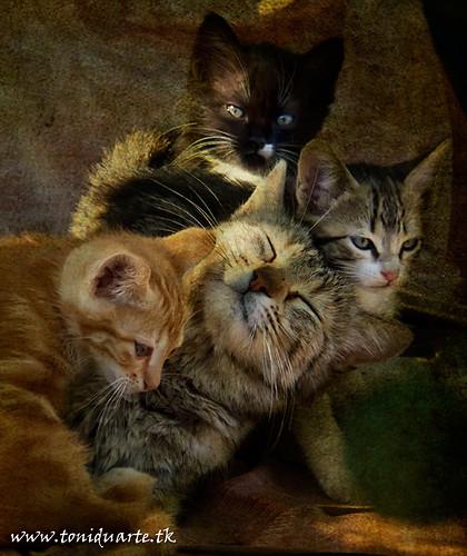Gats,Cats,Gatos