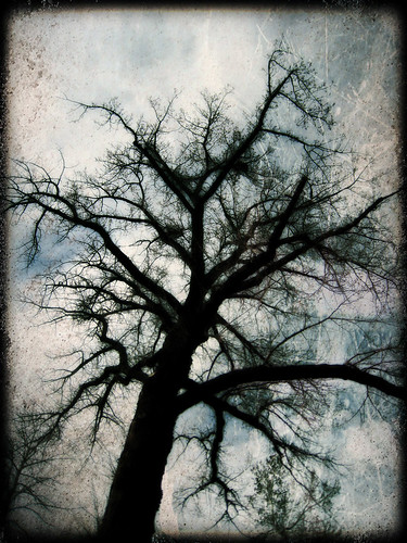 Tree @ Idlewild Park, Edited