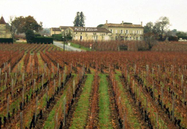 dégâts des gelées printanières dans les vignobles de Pomerol et Saint-Emilion les 21 et 22 avril 1991 météopassion