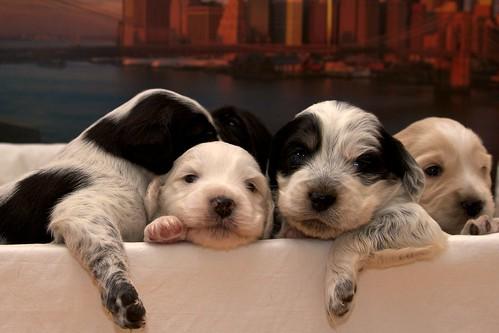 Puppies by Iacopo Trezzi