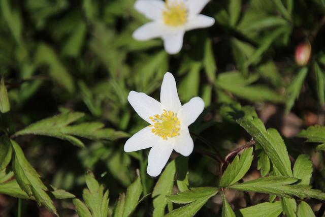 IMG_0242flower