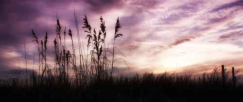 morning sky silhouette sunrise dunes south carolina