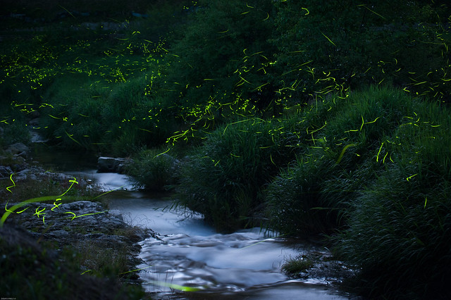 The Glow of a firefly