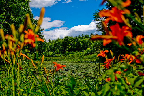 Lily Pond; Kensington, NH June 2012 by Arthur Noel