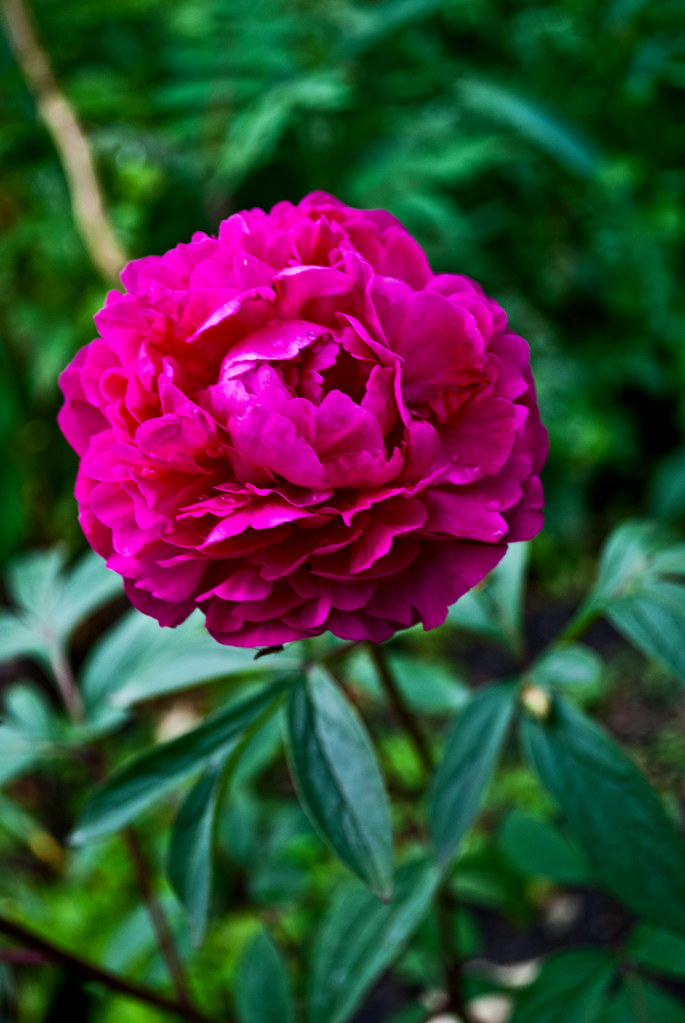 365-360 Pink Flower