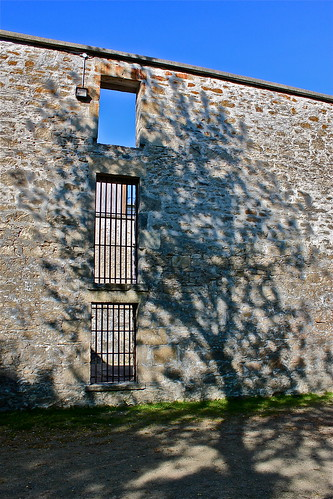 (Day 51) Shadow of a tree on our history. Goldie Mill. by Aidan M.D. Ware