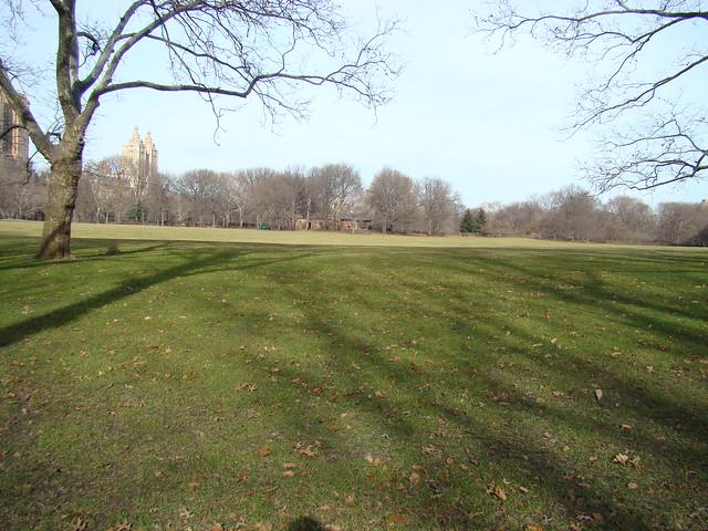 Central Park green fields