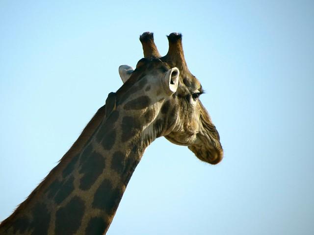 moremi game reserve in botswana