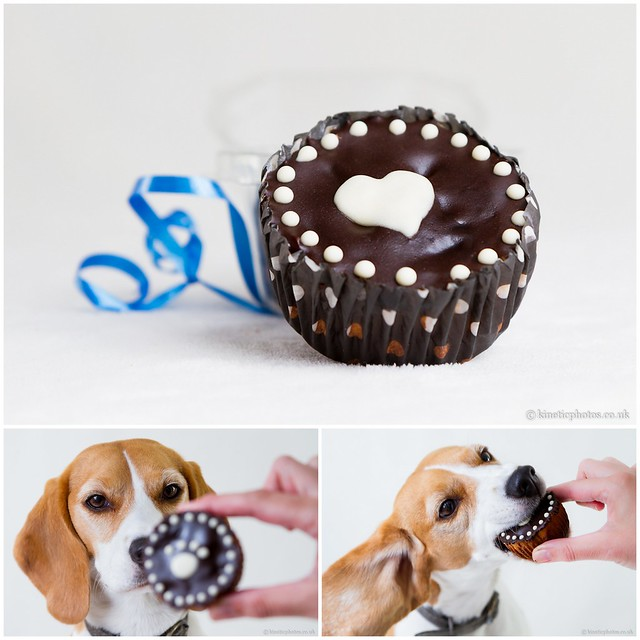 Chocolate Pupcake