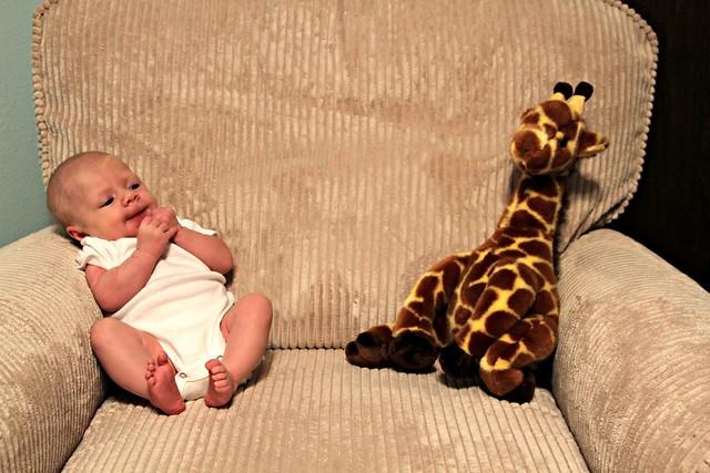 M vs. Giraffe Week 5