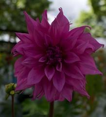 Chenies Manor Plant & Garden Fair