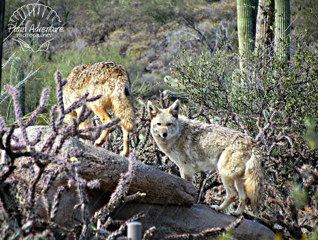 7666371864 604c3eb608 z  Arizona Sonora Desert Museum