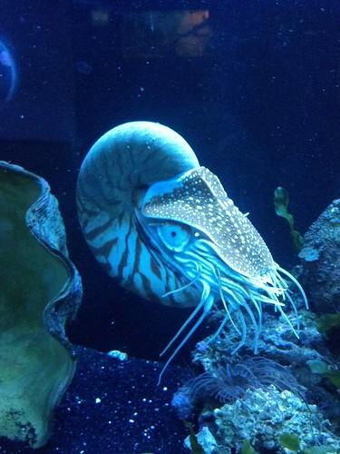 Idaho Aquarium 7-22-12