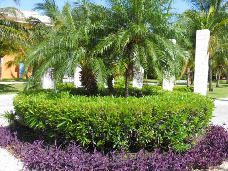 Jardines Bah�a Pr�ncipe 3