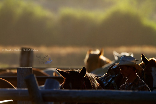 Backlit Cowboy and Horses