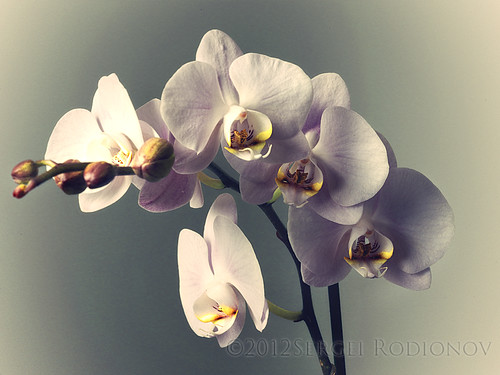 3 views of Orchid - 3