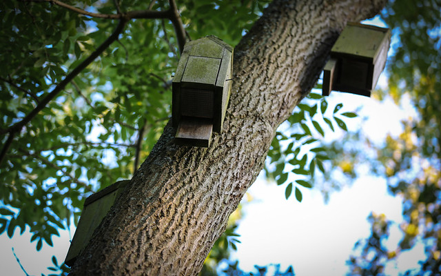 Three Bird Boxes