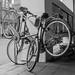 Entangled bicycles by Bart van Dijk (...)