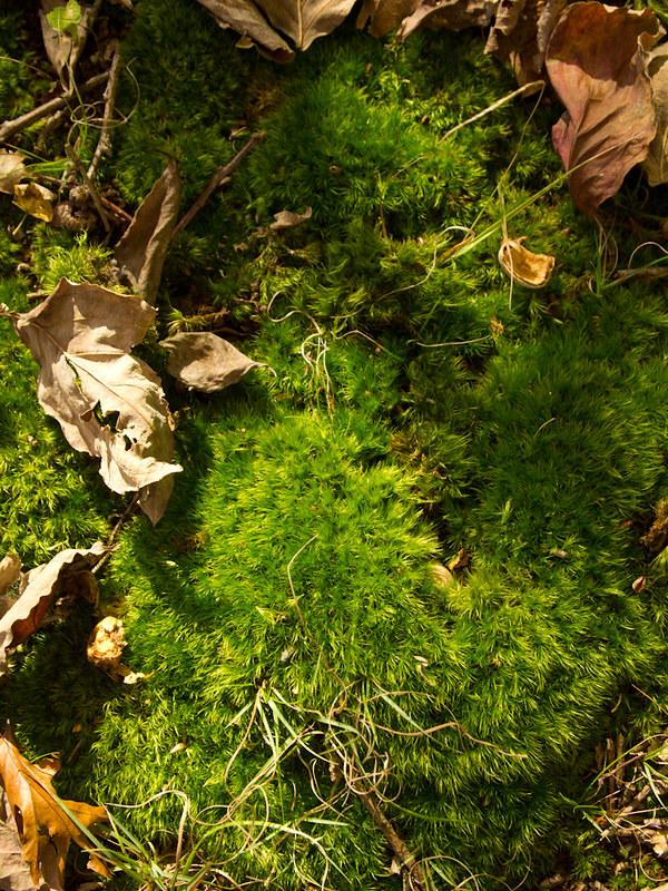 Moss Pelt