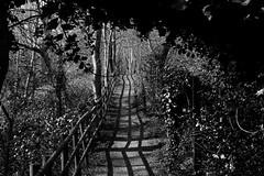 Old Park Wood 2014