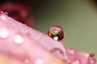 That one Pink Droplet