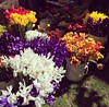 Great time to get flowers at PSU Farmers Market!
