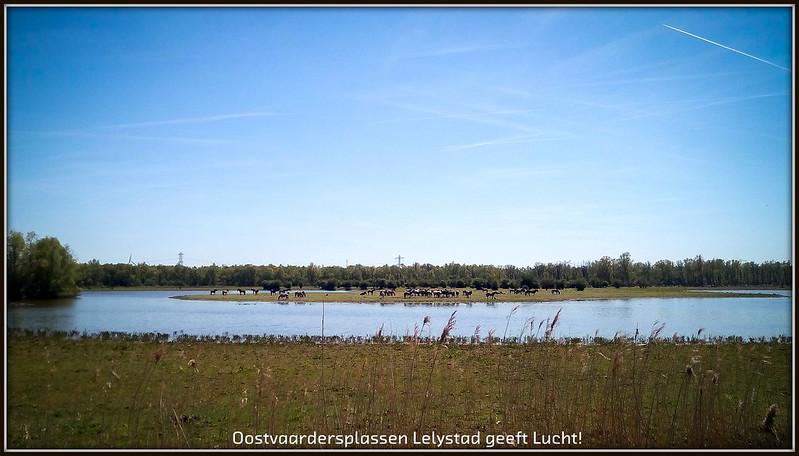 Oostvaardersplassen Lelystad geeft Lucht!