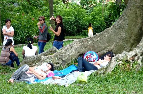 V 12-Ho Chi Minh-Jardin zoologique (1)