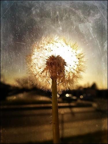 Sunset Wishes