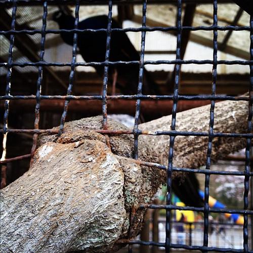 網と木とキジ